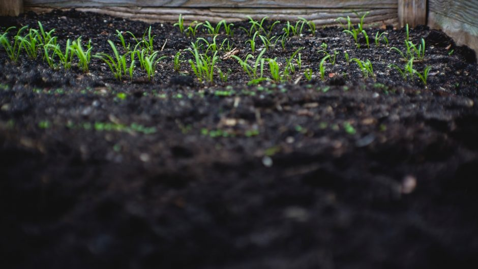 Top Ways to Improve Your Gardens Soil